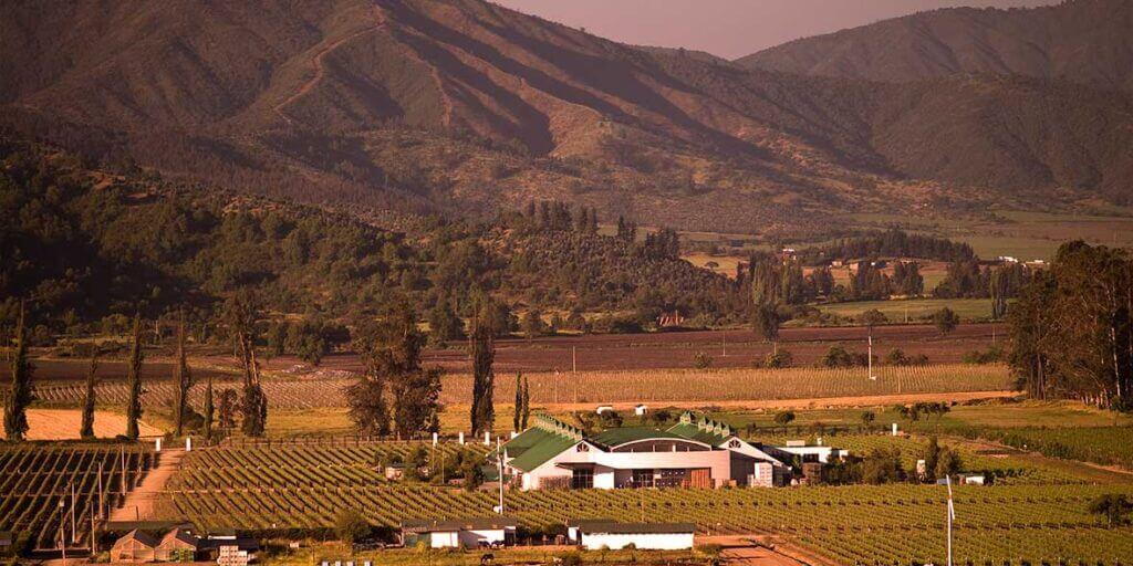 Vinícola Casa Viva Wines Vale Casablanca